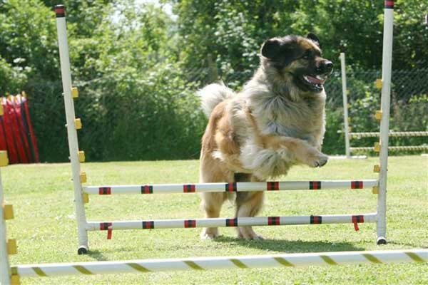 agility jumping