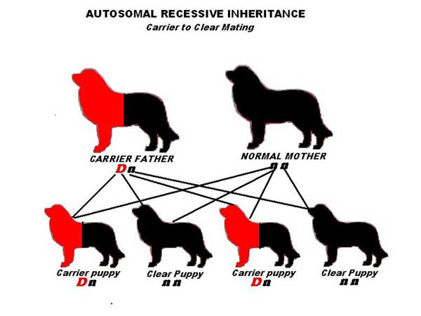 Autosomal Recessive inheritance - Carrier to Clear