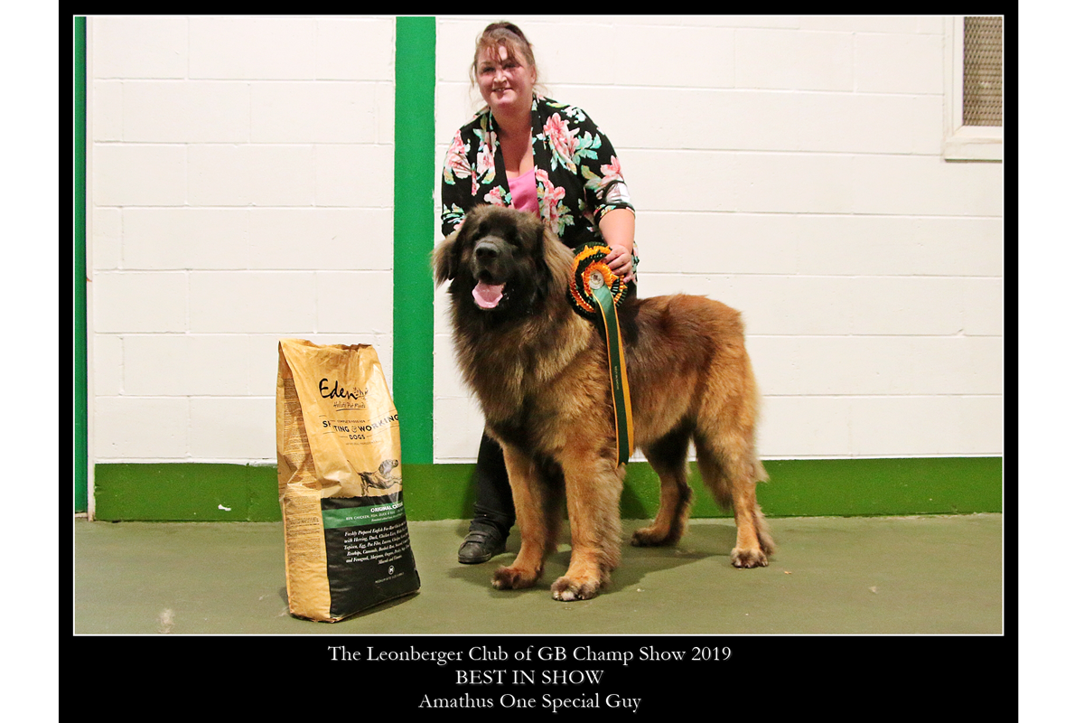 2019 Champ Show - Best in Show